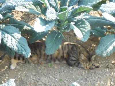 un-gatto-che-dorme[1]