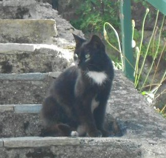 Gattina nera