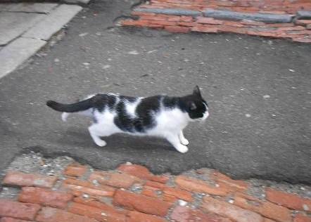 Gatto del Carmine (2)