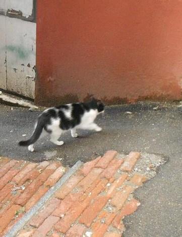 Gatto del Carmine (3)