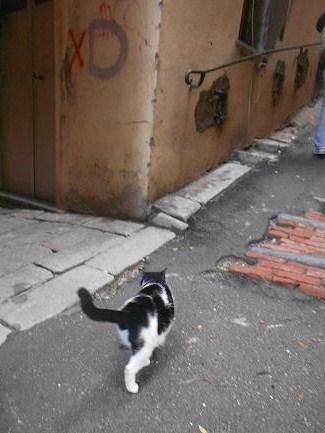 Gatto del Carmine (5)