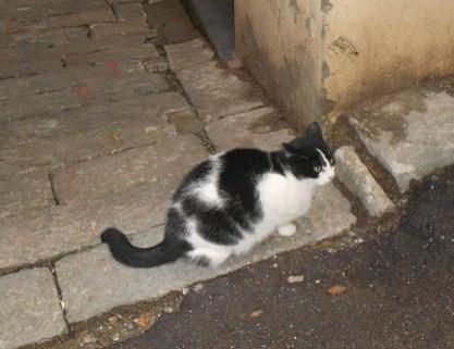 Gatto del Carmine (7)