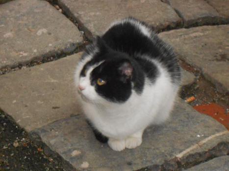 Gatto del Carmine (8)