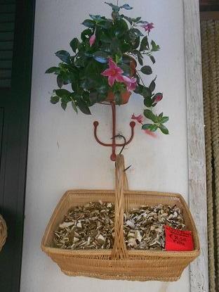 Funghi (2)