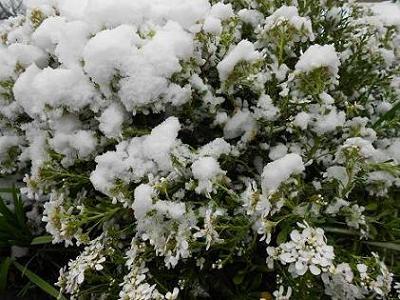 Neve (2)