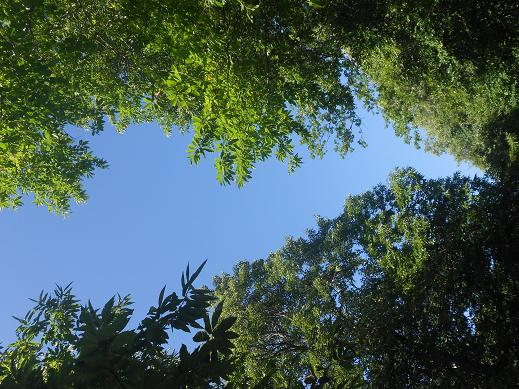 Alberi e cielo