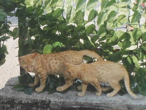 Gattini rossi