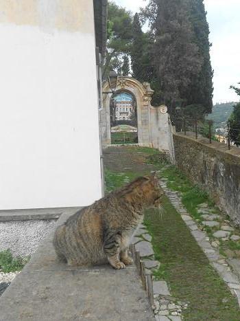 Gatto (2)