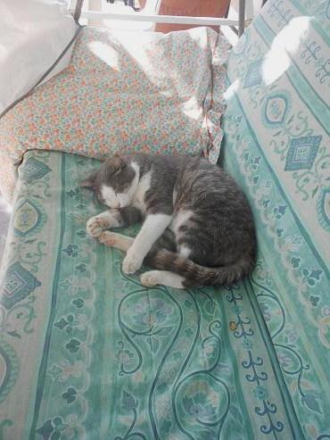 Gatto di Corte Brugnatella