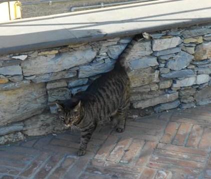 Gatto di Pieve Alta (2)