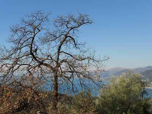 Liguria (4)