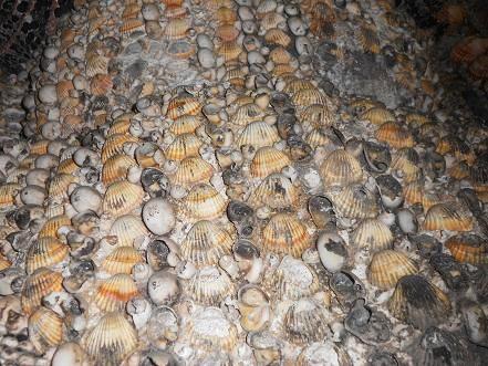 Grotta Doria (13)