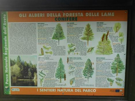 Foresta delle Lame (2)