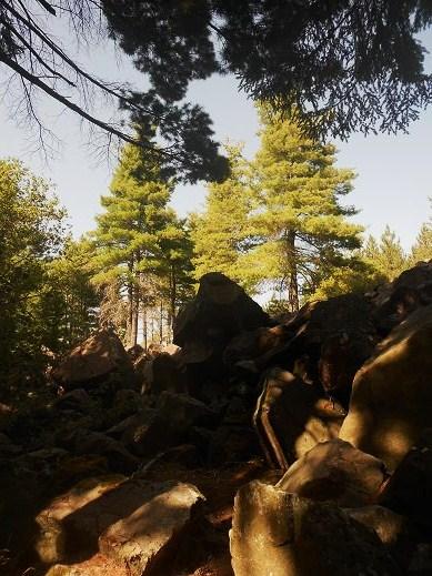 Foresta delle Lame (4)