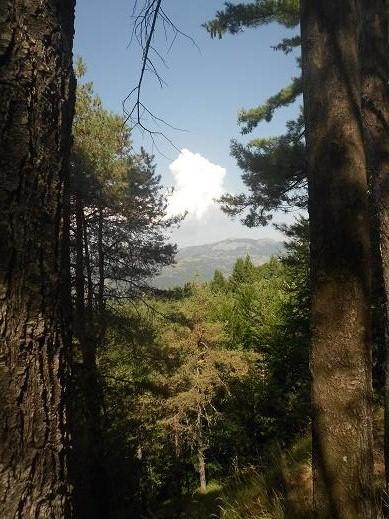 Foresta delle Lame (5)