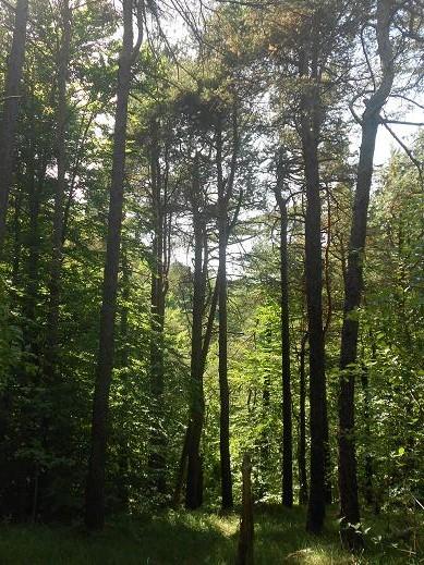 Foresta delle Lame (6)