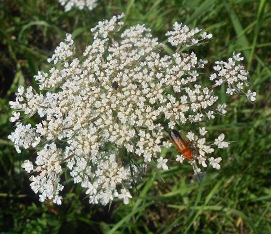 Il mondo piccolo degli insetti dear miss fletcher for Fiori piccoli bianchi