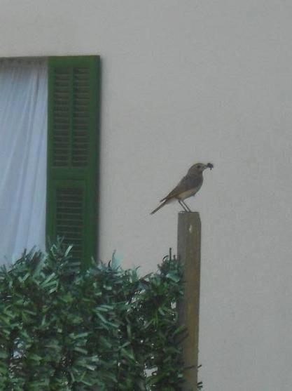 Uccenllino 12