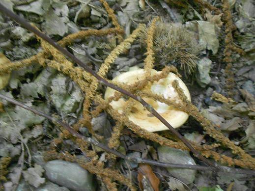 Funghi (9)