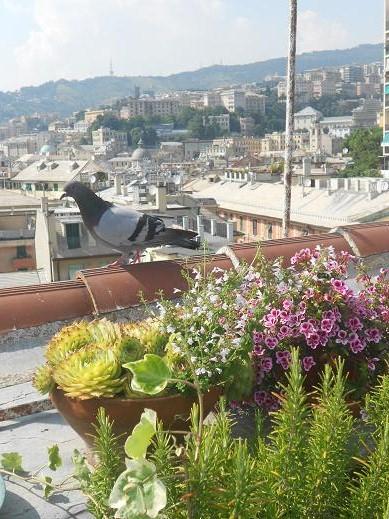 Tetti di Genova (11)