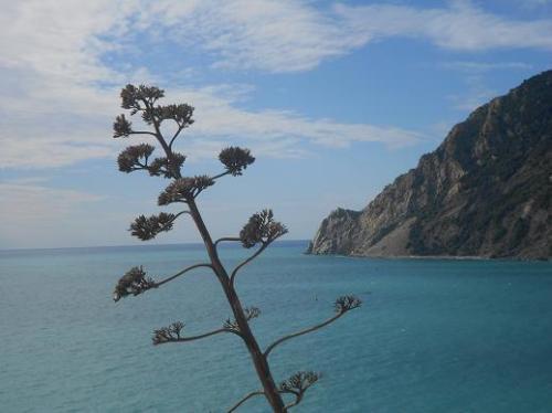 Monterosso (58)