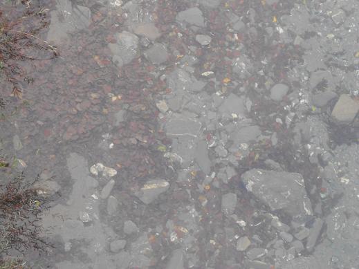 Val Trebbia Autunno (11)