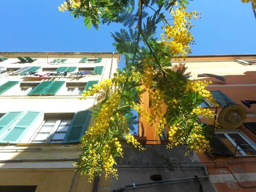 Campopisano Mimosa 3