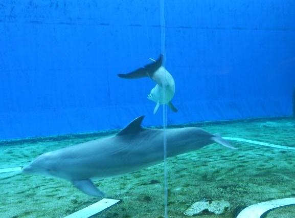 Delfini (3)