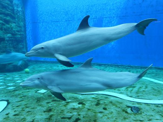 I delfini e le alchimie dell'amore  Dear Miss Fletcher