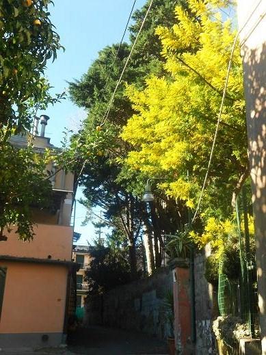 Via Priaruggia (2)