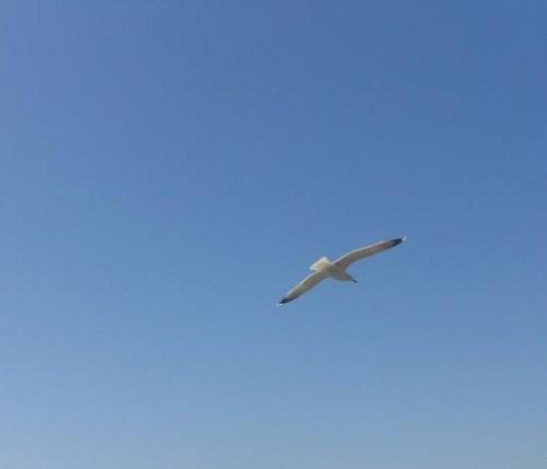 Vernazza - la spiaggia (15)