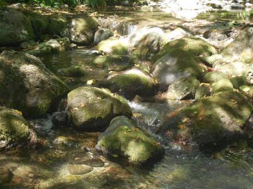 Acqua Pescia
