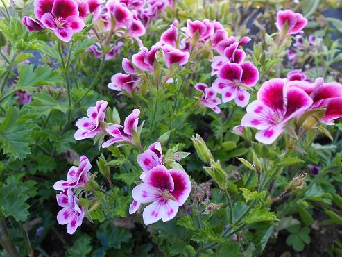 I fiori sul mio terrazzo dear miss fletcher