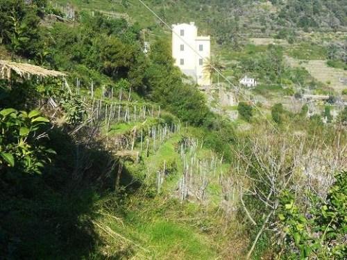 Corniglia (15)