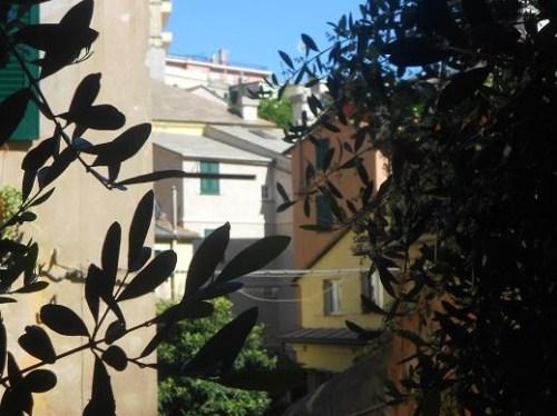 San Bartolomeo dell'Olivella (9)