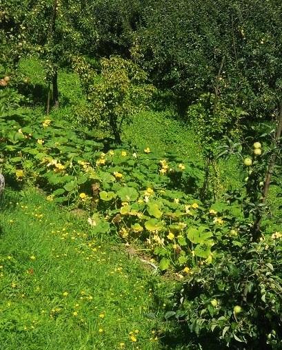 Zucchini (2)