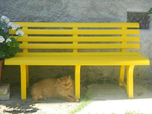 Gatti rossi (10)