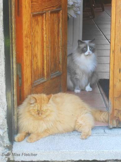 Gatti rossi (11)