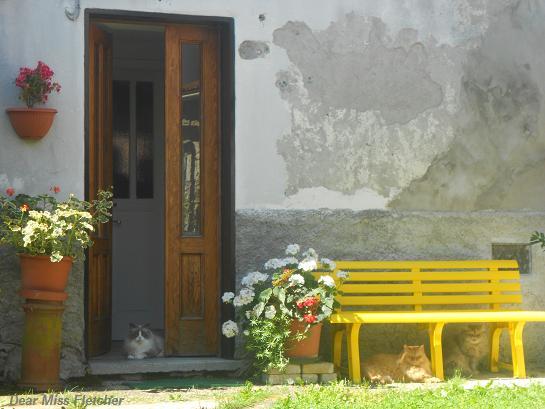 Gatti rossi (12)
