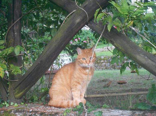 Gatti rossi (13)