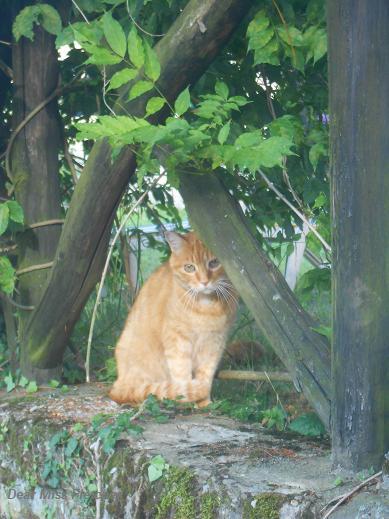 Gatti rossi (14)