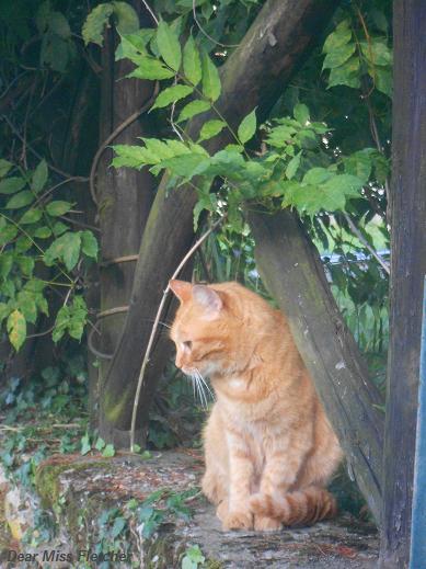 Gatti rossi (15)
