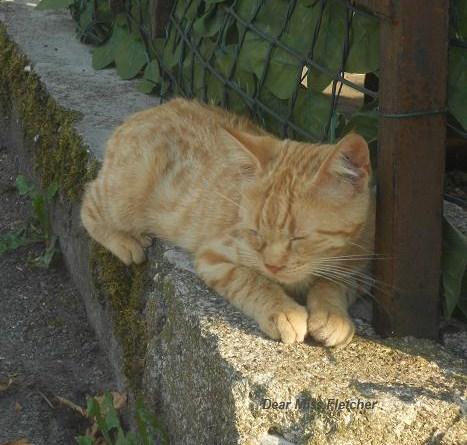 Gatti rossi (3)