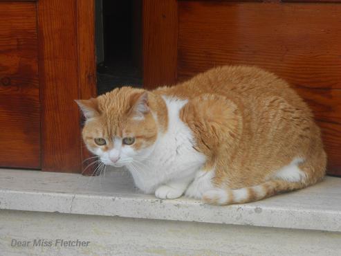 Gatti rossi (5)