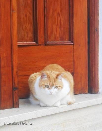 Gatti rossi (6)