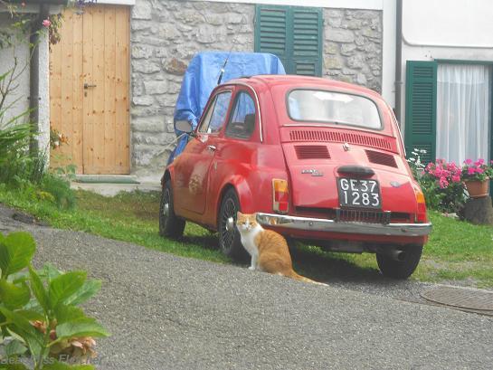 Gatti rossi (7)