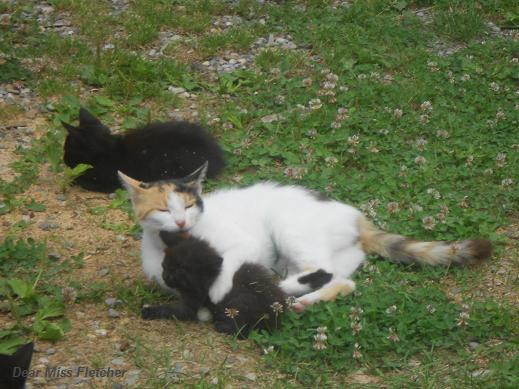 Gatti rossi (8)