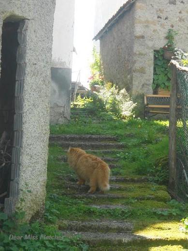 Gatti rossi (9)