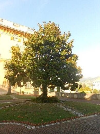 Villa Brignole Sale (13)
