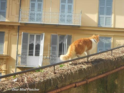 Gatto (5)